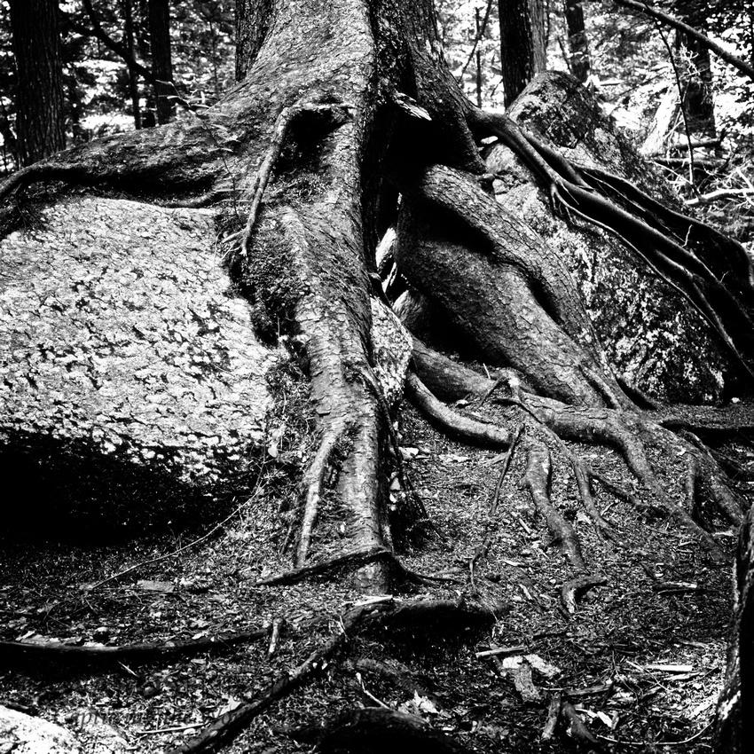 Roots, Auger Falls